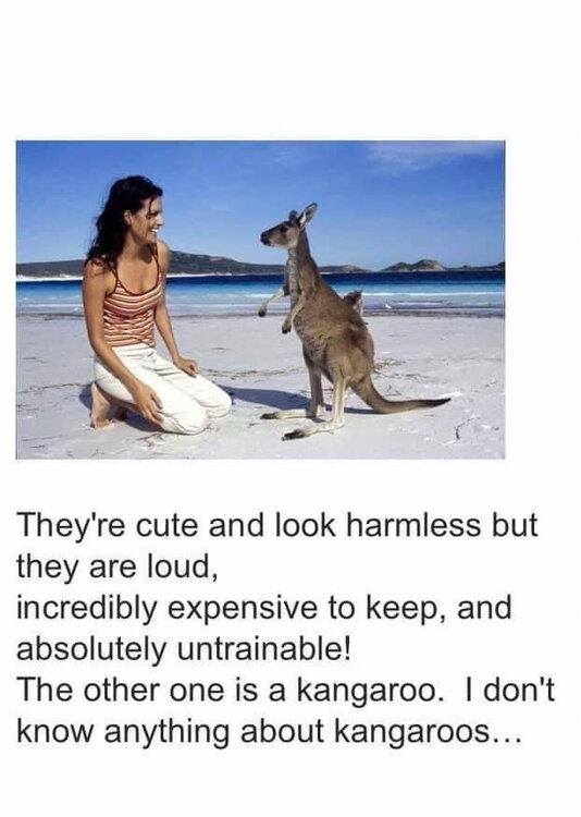 kangaroo.thumb.jpg.2681b599739c6d903ff8673a3a4c5f79.jpg
